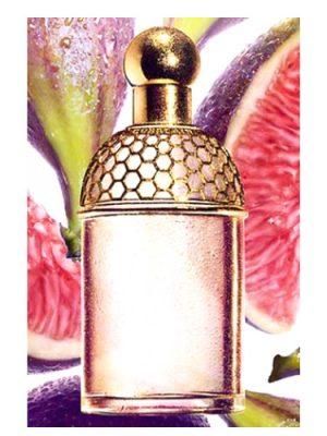 Guerlain Aqua Allegoria Figue - Iris Guerlain для женщин