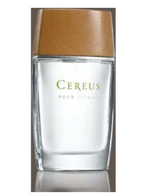 Cereus Cereus No.4 Cereus для мужчин